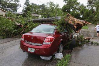 danni-alberi